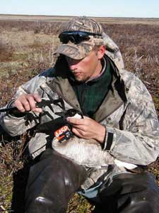 researcher with goose